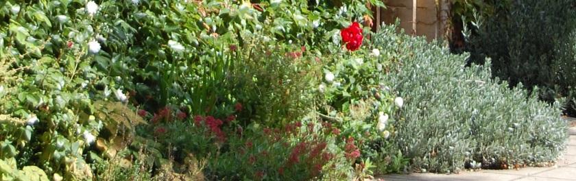 flower-border