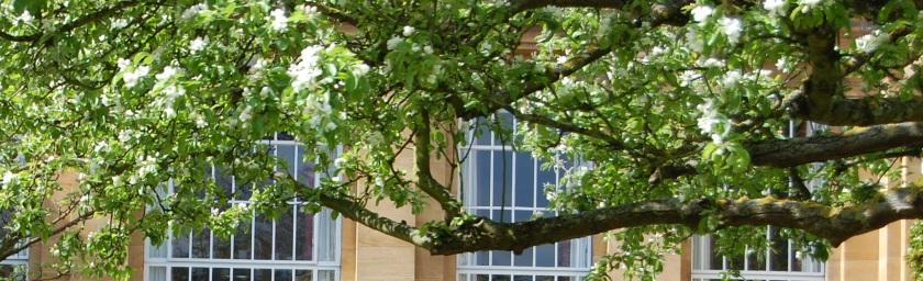 tree-windows